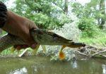 Щука и давление – При каком давлении клюет щука — Здесь рыба