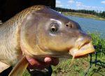 Рыбалка на карпа осенью в украине лучшие снасти в это время – Ловля карпа осенью-Советы бывалых при ловле. Интересные факты