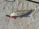 Снасть шпага для ловли барабули – Где искать и как ловить барабульку в Чёрном море? – РЫБАЛКА