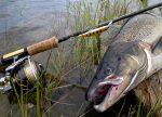 Снасти для ловли семги – Как поймать сёмгу. Все способы