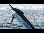 Рыба ратан видео – Популярные фильмы 2016 — Видео онлайн
