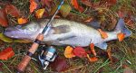 Когда осенью ловить рыбу – какую рыбу ловить. На что ловить осенью