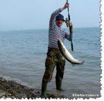 Ловля пеленгаса на азовском море с берега – Ловля пеленгас на азовском море